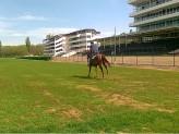 Cílová rovina PA  s koněm  ve cvalu 26.4.2019